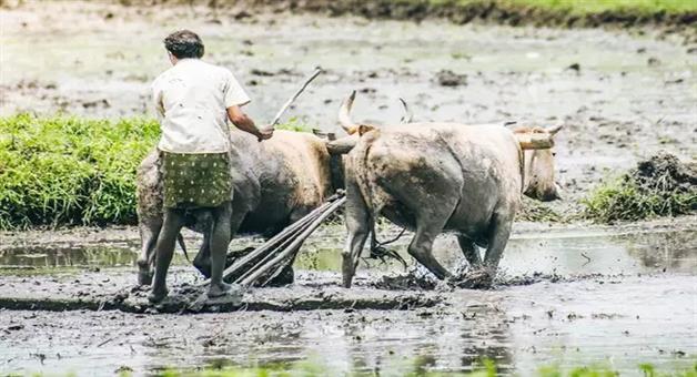 Khabar Odisha:National-odisha-kisan-credit-card-linked-to-aadhar-card-otherwise-farner-not-get-benefit-of-pradhan-mantri-fasal-bima-yojana
