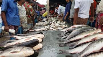 Khabar Odisha:No-Farmalin-in-fish-of-Odisha