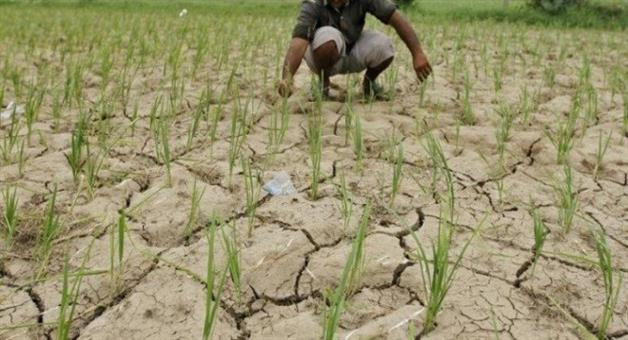 Khabar Odisha:Odisha-CM-Special-Package-Announced-for-Drought-Affected-Farmer