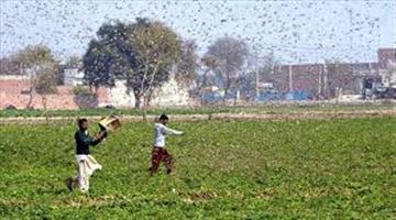 Khabar Odisha:Odisha-govt-prepare-for-locust
