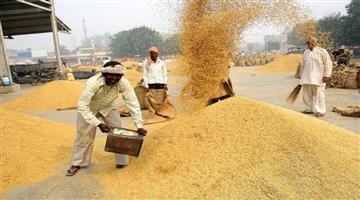 Khabar Odisha:Paddy-Procurement-Touches-All-Time-High-Of-805-LMT
