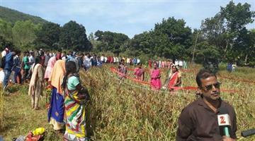 Khabar Odisha:Pragati-NGO-begs-international-Award-for-cultivation-ragi-on-sri-method