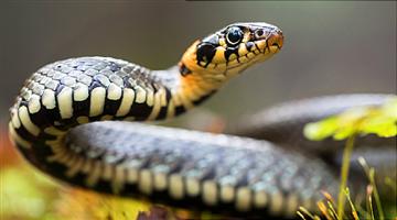 Khabar Odisha:State-Odisha-2sisters-dead-due-to-snake-bite