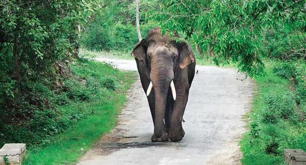 Khabar Odisha:State-Odisha-3-Dead-in-Elephant-Attack