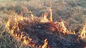 Khabar Odisha:State-Odisha-Farmer-sets-fire-on-pest-infected-crops-over-several-acres-of-land-in-Karlamunda-block-of-Kalahandi