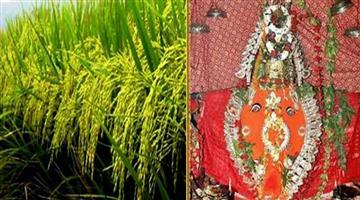 Khabar Odisha:State-Odisha-Nuakhai-Nabanna-time-decided