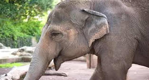 Khabar Odisha:State-Old-man-killed-by-elephant-near-Baripada-town-in-Mayurbhanj-district-yesterday