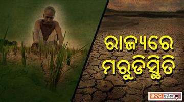 Khabar Odisha:State-odisha-drought-situation-in-odisha-farmer-in-trouble