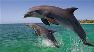 Khabar Odisha:The-dolphin-count-began-in-Bhitarkanika