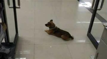 Khabar Odisha:The-owner-is-dead-in-Corona-the-dog-is-waiting-for-the-owner-to-return-to-the-hospital-for-3-months