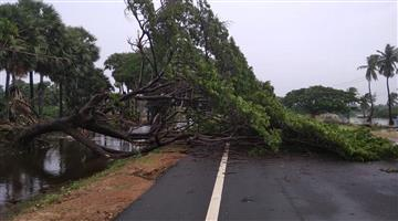 Khabar Odisha:The-young-woman-died-after-a-tree-fell-on-the-road-and-her-boyfriend-returned-from-the-scene