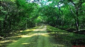 Khabar Odisha:To-day-is-international-day-of-forest