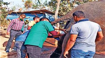 Khabar Odisha:Vaccination-of-elephants-has-begun-at-the-Chandaka-Wildlife-Sanctuary