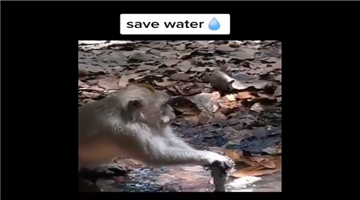 Khabar Odisha:ajab-khabar-odisha-a-monkey-saves-water-people-ask-who-are-the-real-animals-watch-video