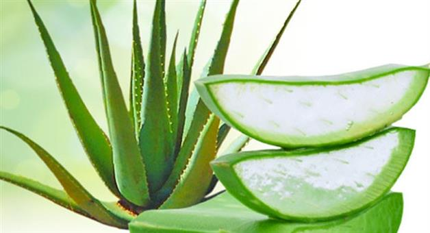 Khabar Odisha:benefits-of-aloe-vera