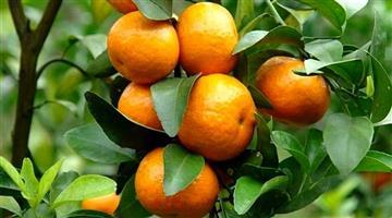 Khabar Odisha:benifits-of-orange