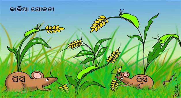 Khabar Odisha:cartoon-Khabar-Odisha-Kalia-Yojna
