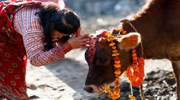 Khabar Odisha:cow-become-nation-mother-proposal-pass-in-uttarakhand-assembly