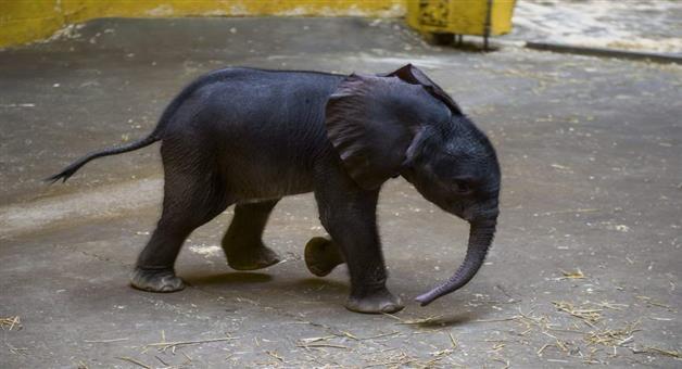 Khabar Odisha:crime-odisha-baripada-forest-department-tried-to-hide-elephant-death