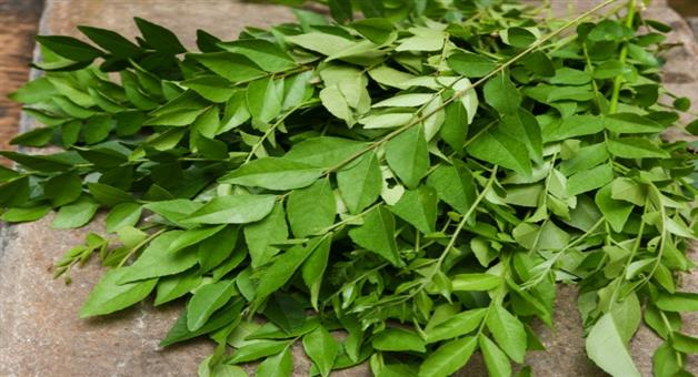 Khabar Odisha: curry leaves is beneficial for health include in ...