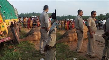 Khabar Odisha:elephant-death-rises-to-3-in-keonjhar