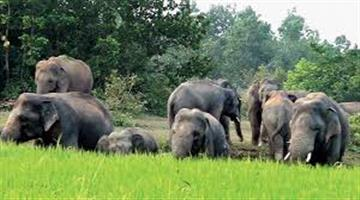 Khabar Odisha:elephant-entered-in-Village