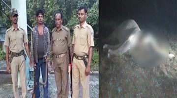 Khabar Odisha:elephant-hunter-arrested-in-athagarh