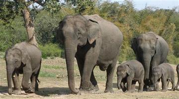 Khabar Odisha:elephant-terror-in-malkangiri