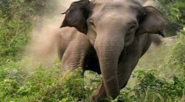 Khabar Odisha:farmer-died-in-elephant-attack