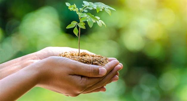 Khabar Odisha:forest-minister-said-11-lakh-tree-will-plantation-in-city