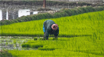 Khabar Odisha:govt-extends-deadline-for-registration-of-farmers-for-paddy-collection