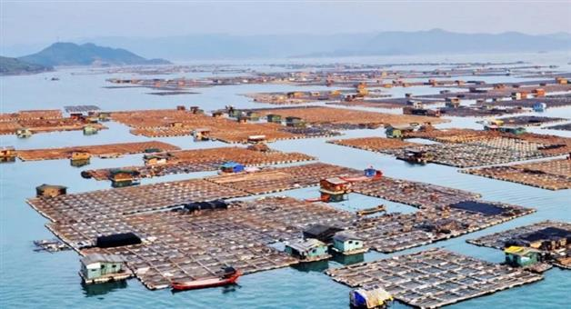 Khabar Odisha:gypsies-of-the-sea-tanka-people-traditional-floating-homes-on-the-sea-in-ningde-city-in-china