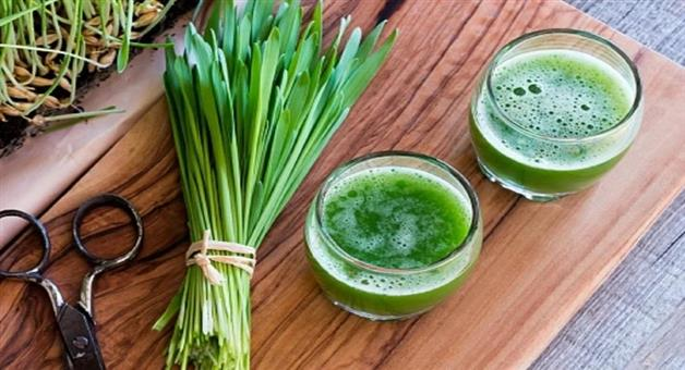 Khabar Odisha:health-benefits-of-wheatgrass-juice-