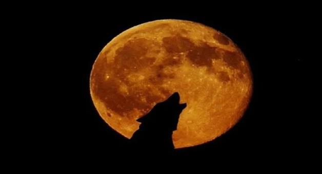 Khabar Odisha:know-all-about-super-blood-wolf-moon-eclipse-on-january-20-why-is-it-called-wolf-moon