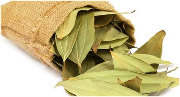 Khabar Odisha:lifestyle-Odisha-Amazing-Health-benefits-of-Cinnamomum-tamala-or-bay-leaf-Tejpata