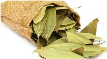 Khabar Odisha:lifestyle-Odisha-Amazing-Health-benefits-of-Cinnamomum-tamala-or-bay-leaf-Tejpata