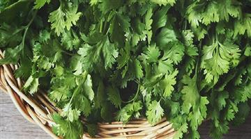 Khabar Odisha:lifestyle-Odisha-coriander-leaf-for-weight-reduction
