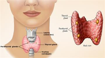 Khabar Odisha:lifestyle-Odisha-world-thyroid-day-2019-possibility-of-thyroid-in-women-is-relatively-high-studies-