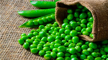 Khabar Odisha:lifestyle-health-odisha-surprising-health-benefits-of-green-peas