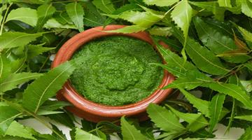 Khabar Odisha:lifestyle-these-are-the-health-benefits-of-neem-tpral