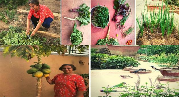 Khabar Odisha:national-odisha-bhawna-shah-organic-and-unique-home-ahmedabad