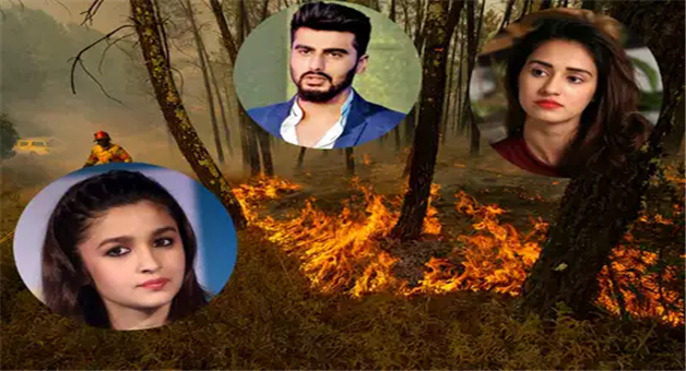 Khabar Odisha:national-odisha-bollywood-amazon-rainforest-fire-bollywood-celebrities-twitter-instagram-post-about-save-amazon-alia-bhatt-arjun-kapoor-disha-patani