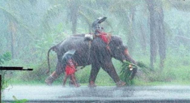 Khabar Odisha:national-weather-odisha-monsoon-in-kerala-rain-starts