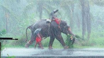 Khabar Odisha:national-weather-odisha-monsoon-in-kerala-rain-starts