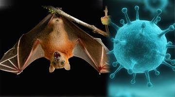 Khabar Odisha:nipah-virus-alert-in-rajasthan-govt-ask-officials-to-create-awareness