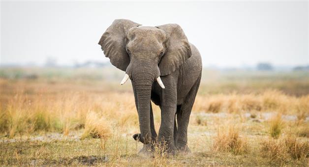 Khabar Odisha:odisha-elephant-attack-in-khurda