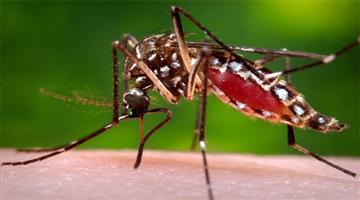 Khabar Odisha:one-died-in-dengue-at-scb