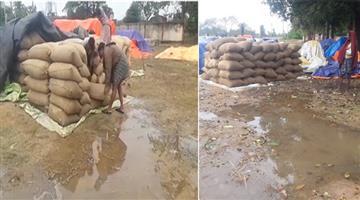 Khabar Odisha:paddy-affected-due-to-pethai