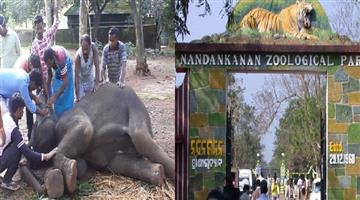 Khabar Odisha:state-Odisha-Herpes-virus-in-nandankanan-A-Special-team-will-come-for-treatment