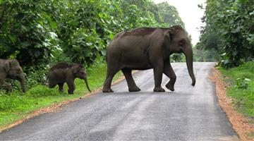 Khabar Odisha:state-Odisha-dhenkanal-elephant-attack-three-people-injured